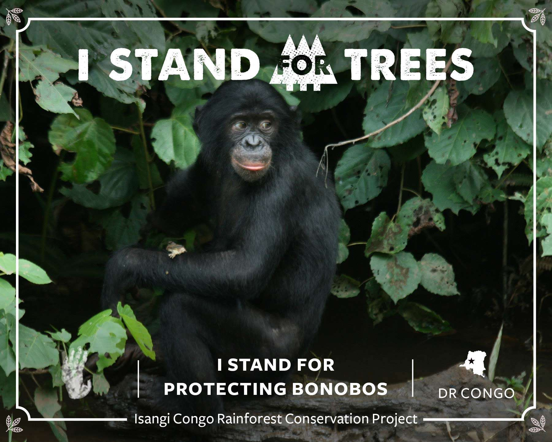 I Stand for Trees contributor certificate